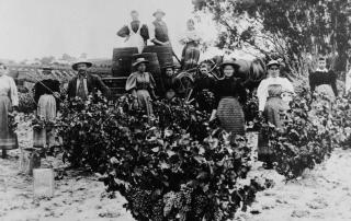 Barossa 1840 – 1940