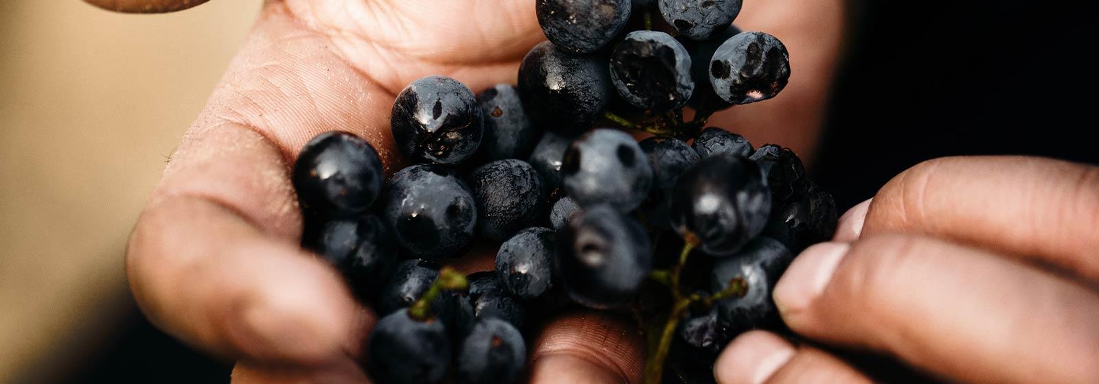 Barossa Wine Varieties