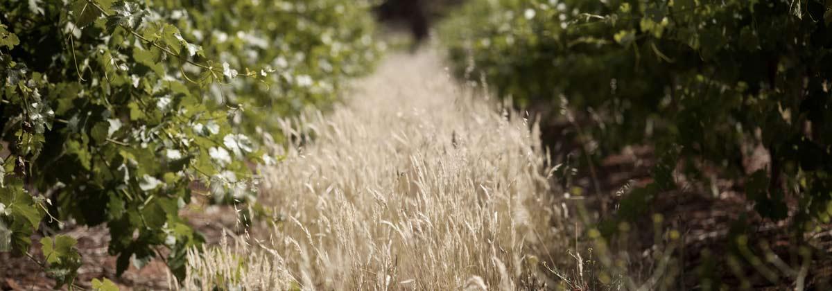 Sustainable Barossa Growers