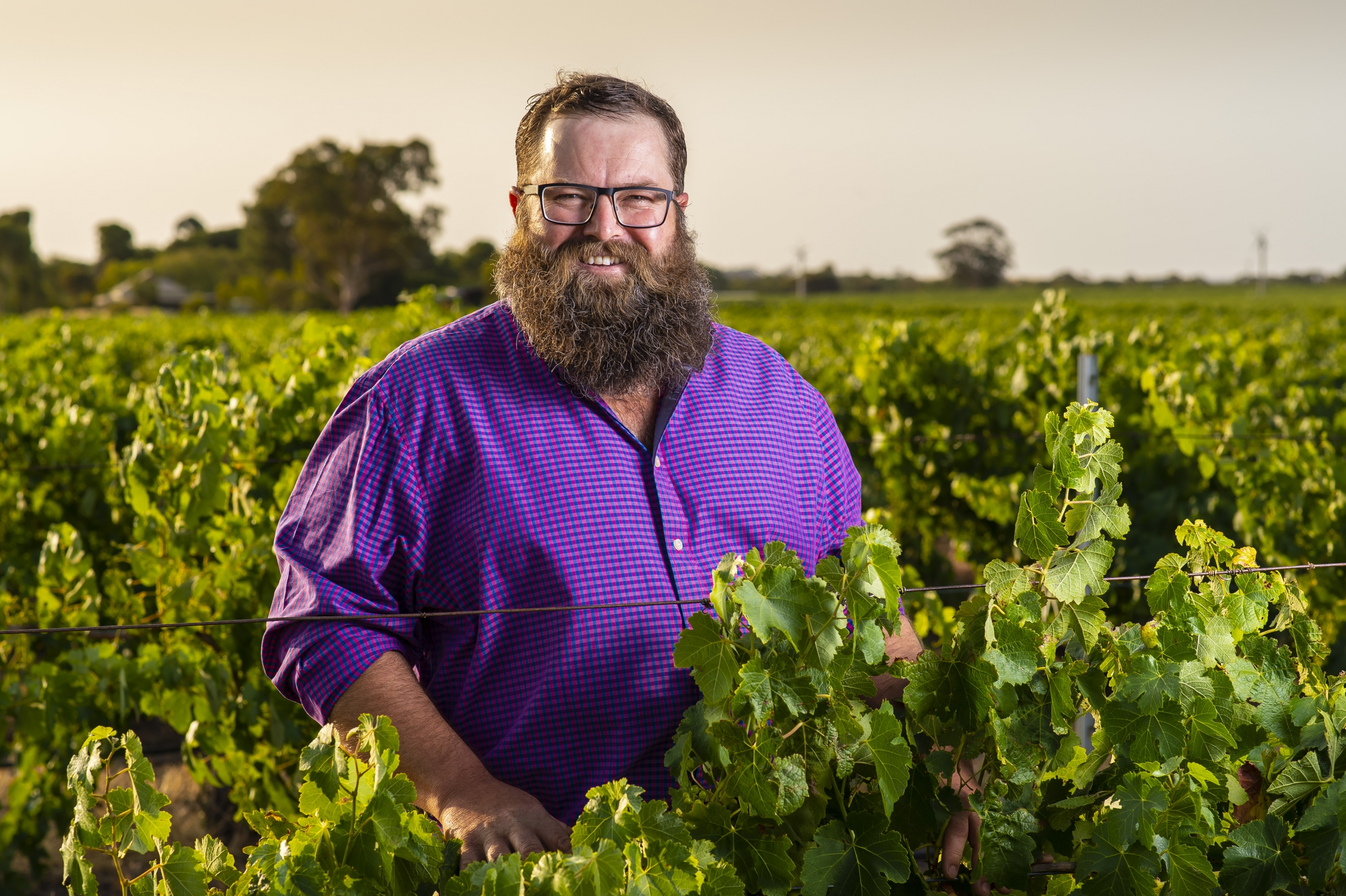 Barossa grower, Adrian Hoffmann in his vineyard