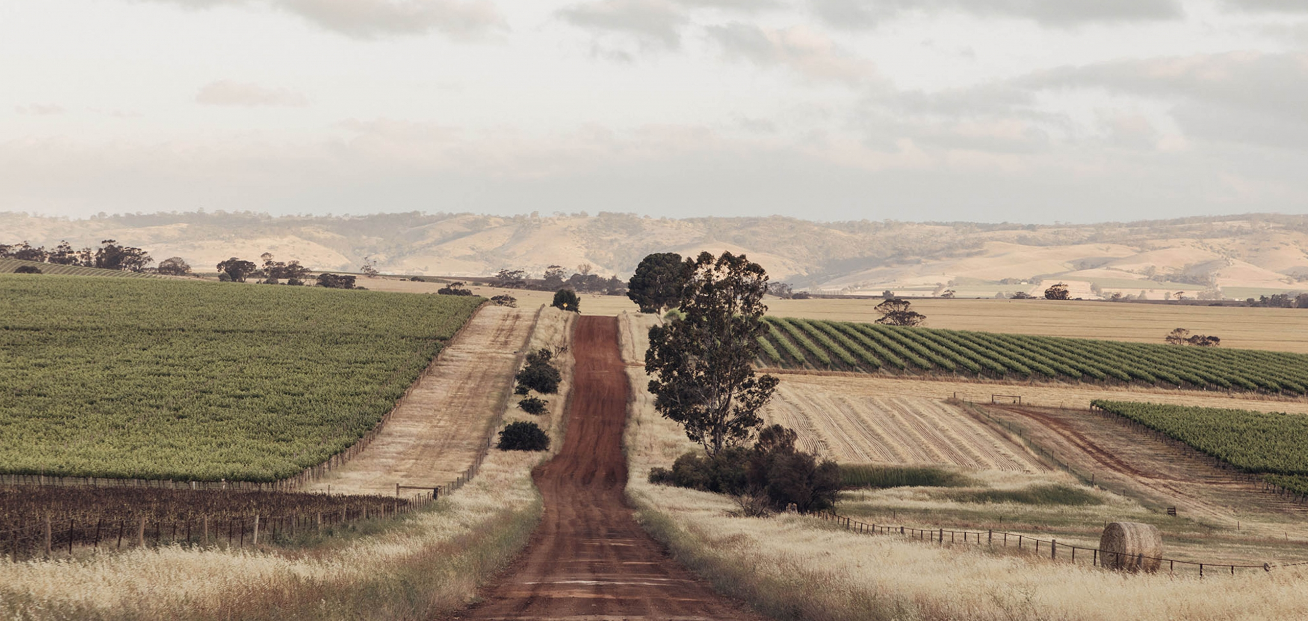 A dirt road cuts through vineyards and paddocks into the rolling hills of the Barossa ranges. South Australia
